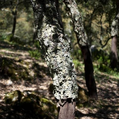 P.N. de Los Alcornocales Image